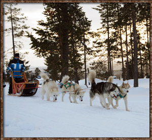 Idre camping langlaufen dogride dogtrip trip dogs sleigh sled husky